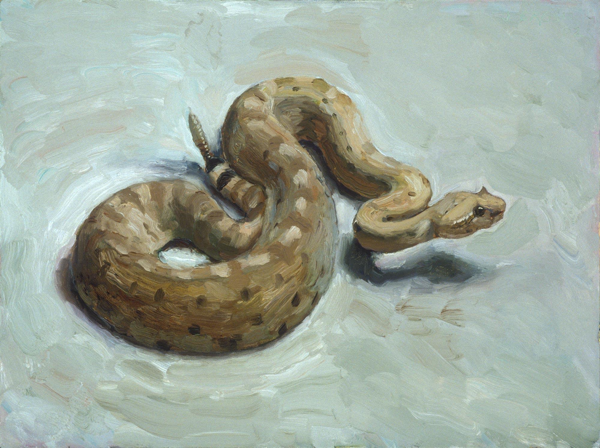 Rattlesnake 2, 18 x 24, oil on canvas, 2002