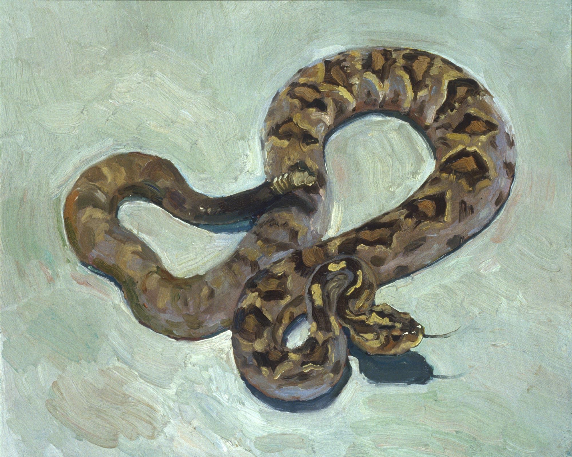 Rattlesnake 3, 20 x 24, oil on canvas, 2002