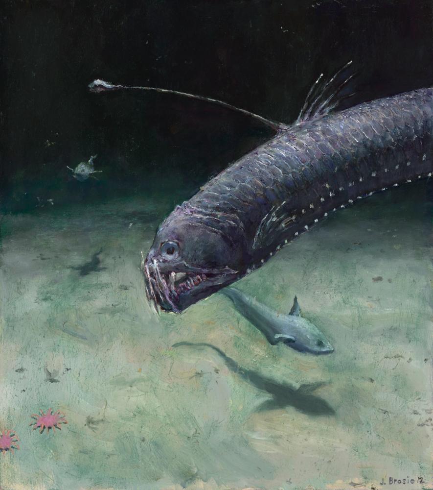 Viper Fish (Study)